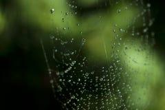 Cobweb Foto de Stock