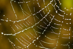 Free Cobweb Royalty Free Stock Photography - 23801557