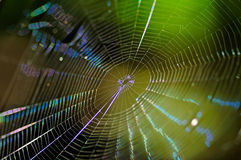 Cobweb. Spider-web background on green autumn texture Stock Images