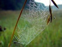 Cobweb. Immagine Stock