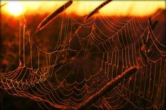 Cobweb Royaltyfri Fotografi