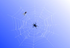 Cobweb Royalty Free Stock Photography