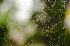 Cobweb Arkivfoto
