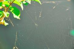Cobweb Royaltyfri Bild