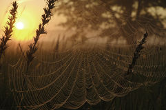 Cobweb. Poland.Meadow near Bug river Stock Images