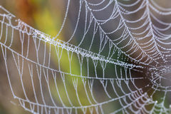 Cobweb. All in dew on a beautiful morning in the meadow Stock Photo