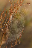 Cobweb. All in dew on a beautiful morning in the meadow Royalty Free Stock Image