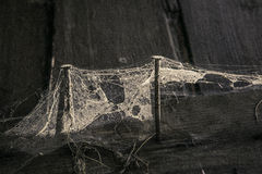 Free Cobweb And Two Rusty Nails Three Boards Royalty Free Stock Photo - 72856055