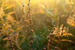 Cobweb in autumn Royalty Free Stock Photography