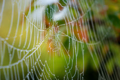 Cobweb in autumn. Nature photo: spider web in the colored surroundings of Autumn England royalty free stock images