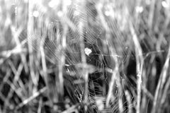Cobweb on the background of grass Royalty Free Stock Photos