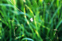 Cobweb on the background of grass Stock Photos