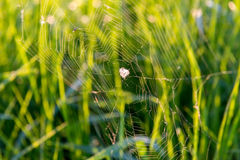 Cobweb on the background of grass stock image