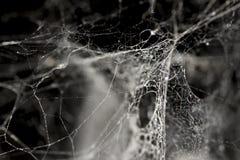 Cobweb background Stock Images