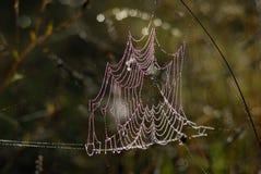 Cobweb backlit with dew. Parco nazionale Abruzzo Lazio Molise stock image