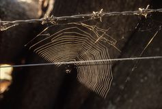 Cobweb on a barbed wire fence. Spider`s web on a barbed wire fence caught in a shaft of sunlight Stock Image
