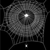 Cobweb  on black background Stock Photo