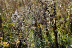 Cobweb close, beautiful cobweb with drops of water Royalty Free Stock Photos