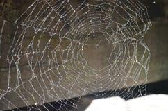Cobweb. Closeup of a lonely cobweb Stock Photography