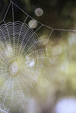 Cobweb  closeup Stock Photos