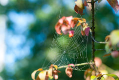 Cobweb closeup, bokeh background Royalty Free Stock Image