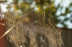 Cobweb. S on the background blurred background Stock Images