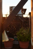 Cobweb Stock Photography