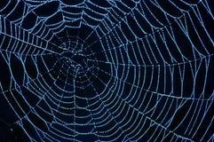 Cobweb com dewdrops cintilando imagem de stock royalty free