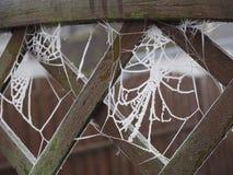 Cobweb congelado Imagens de Stock Royalty Free