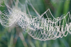 Cobweb covered with morning dew Stock Photo