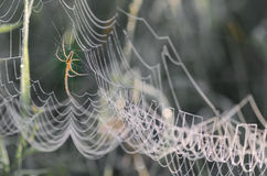 Cobweb covered with morning dew Royalty Free Stock Photos