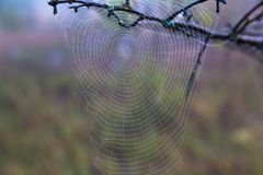 Cobweb in the dew, autumn. Spiderweb in drops of morning dew on the natural blurred background. autumn came Royalty Free Stock Photography