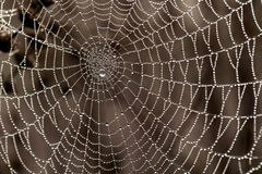Cobweb with dew drops Royalty Free Stock Photography