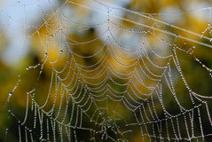 Cobweb Royalty Free Stock Photos