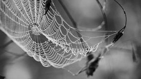 Cobweb in dew drops Stock Photos