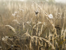 Cobweb with dew drops in morning fog at dawn on blurred background close-up view Stock Photos