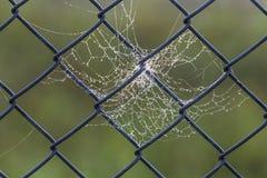 Cobweb dew Royalty Free Stock Photos