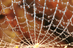 Cobweb in dew Royalty Free Stock Image
