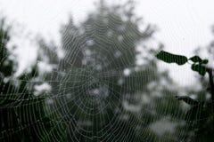 Cobweb drops Royalty Free Stock Photos