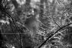 Cobweb in the Forest Royalty Free Stock Photo