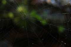 Cobweb is found in the mountains. During the winter Stock Images