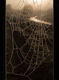 Cobweb in the frost Royalty Free Stock Photos
