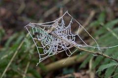 Cobweb Stock Images