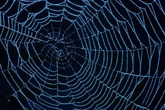 Cobweb with glistening dewdrops Royalty Free Stock Image