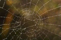 Cobweb with glistening dewdrops. Close-up of the spider web with glistening dewdrops stock images