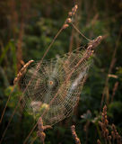 Cobweb on grass Royalty Free Stock Images