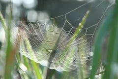 Cobweb in grass Royalty Free Stock Photos
