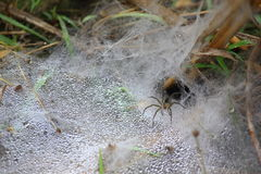Cobweb on the ground Royalty Free Stock Photo