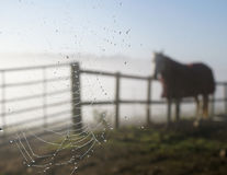 Cobweb horse Stock Photography