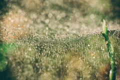 Cobweb i träna arkivfoto